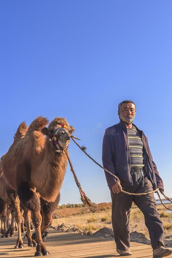 Ejina man med kamlet arkivbilder