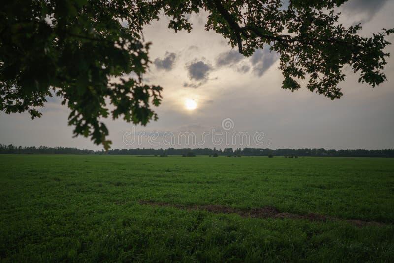 Ek- och lönnträdpar på sommarfält på den soliga aftonen arkivbild