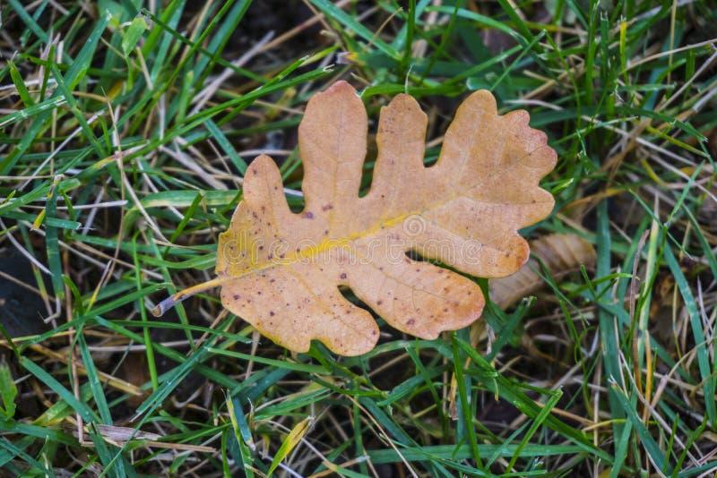 Ekblad hösten colors skogen royaltyfri bild
