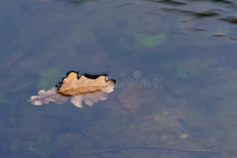 Ekblad som svävar ner floden royaltyfri foto