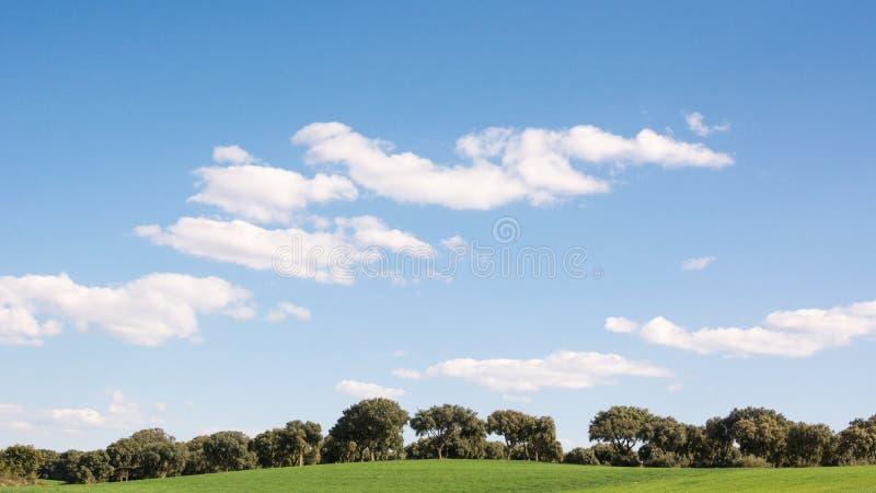 Ekdunge på ett fält för grönt gräs, under en blå himmel i vår royaltyfri fotografi