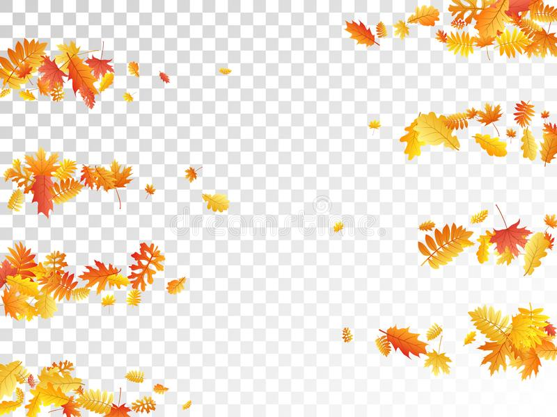 Eken lönn, den lösa askarönnen lämnar vektorn, höstlövverk på genomskinlig bakgrund vektor illustrationer