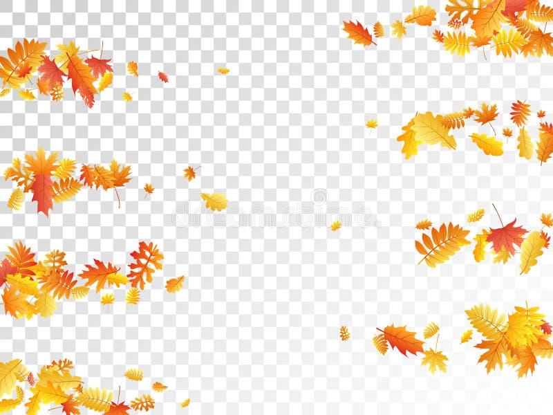 Eken lönn, den lösa askarönnen lämnar vektorn, höstlövverk på tran royaltyfri illustrationer