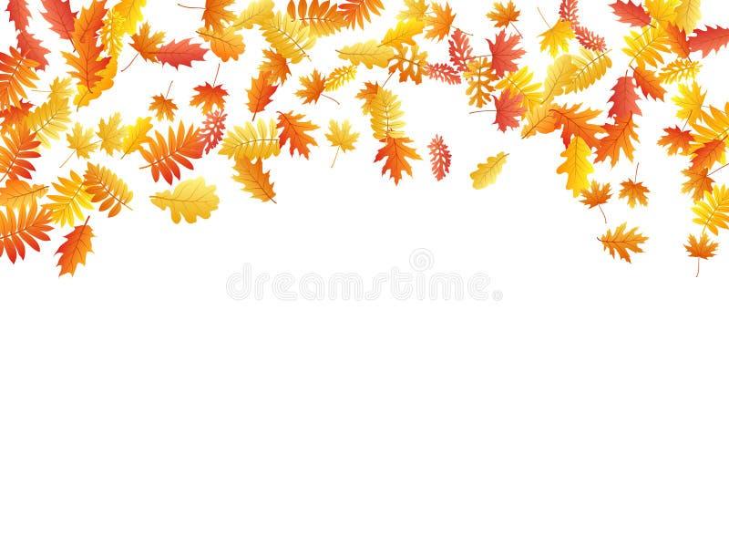 Eken lönn, den lösa askarönnen lämnar vektorn, höstlövverk på vit bakgrund stock illustrationer