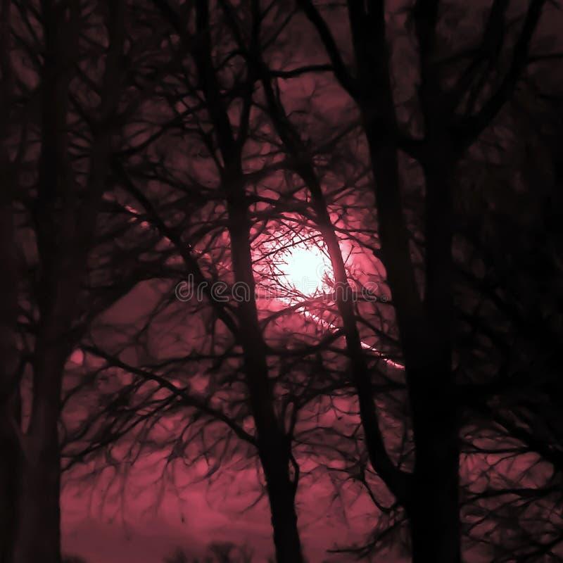 Eklipse-Mond, der steigt lizenzfreie stockbilder
