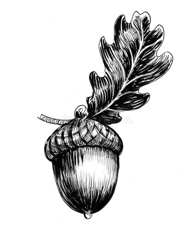 Ekollon och blad royaltyfri illustrationer