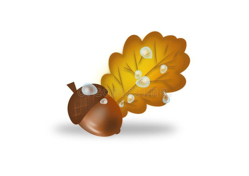 Ekollon och blad av eken stock illustrationer