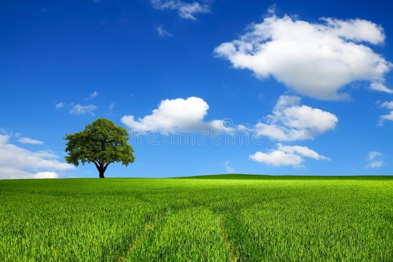 Ekologia piękno fotografia stock