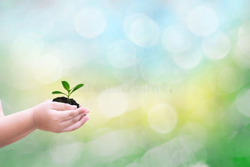 Ekologibegreppsbarnet räcker det hållande trädet och unga trädet med på den suddiga miljön för solnedgångbakgrundsvärlden royaltyfria foton