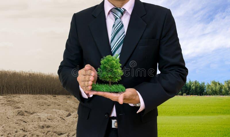 Ekologibegreppsmänniskan räcker det hållande stora växtträdet med på dag för världsmiljö royaltyfria bilder