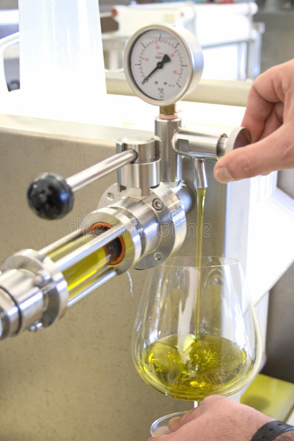 Ekologisk extra jungfrulig olivoljaproduktion med modernt teknologi, extraktion och filtrera arkivbild