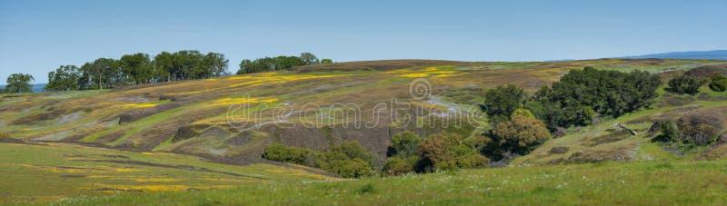 Ekologisk reserv för norr tabellberg, Oroville, Kalifornien royaltyfri fotografi