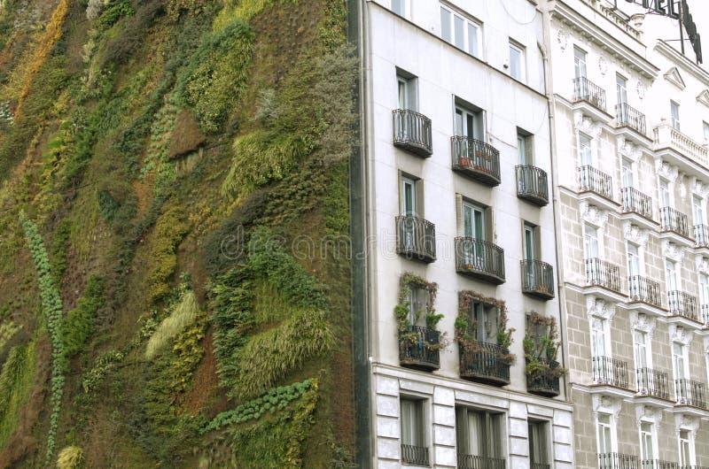 Ekologisk stads- konstruktion Vägg av växter royaltyfria bilder