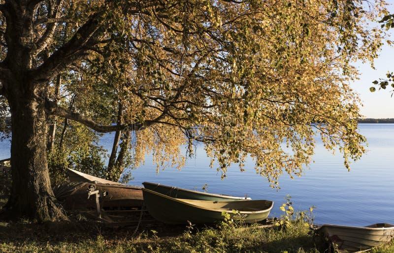 Ekor på en lakefront royaltyfri bild