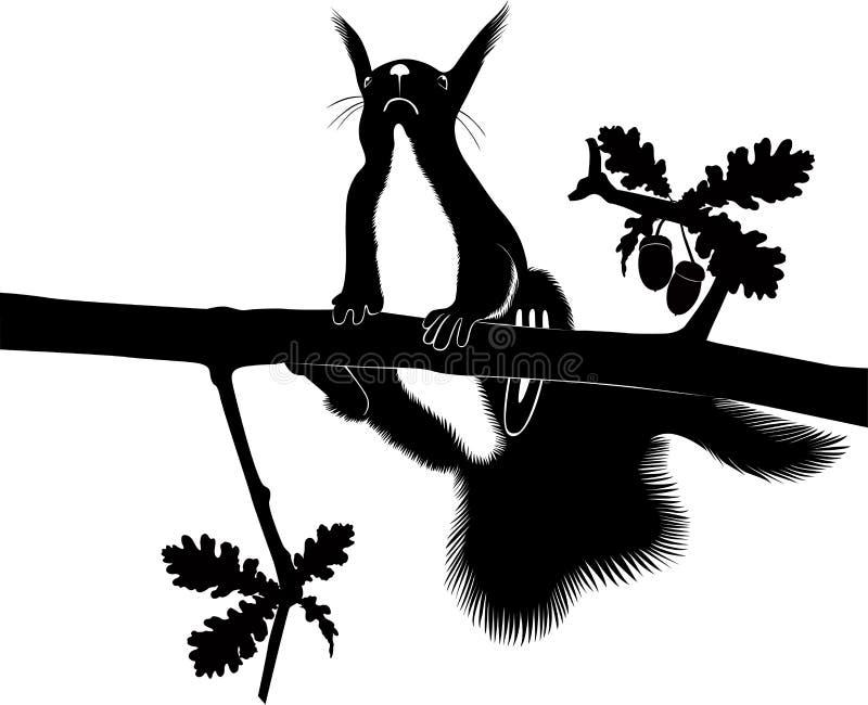 Ekorre vektor illustrationer