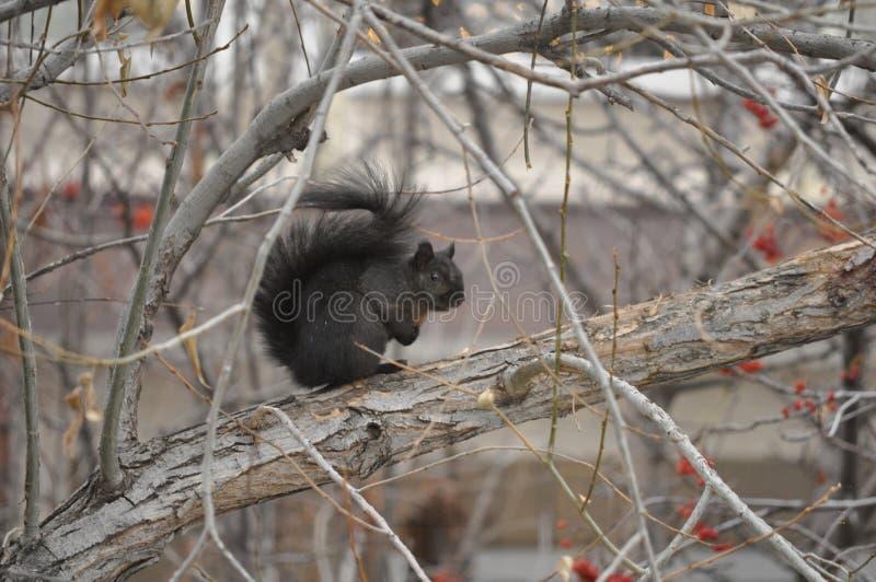 Ekorre som sitter på trädfilial royaltyfri fotografi