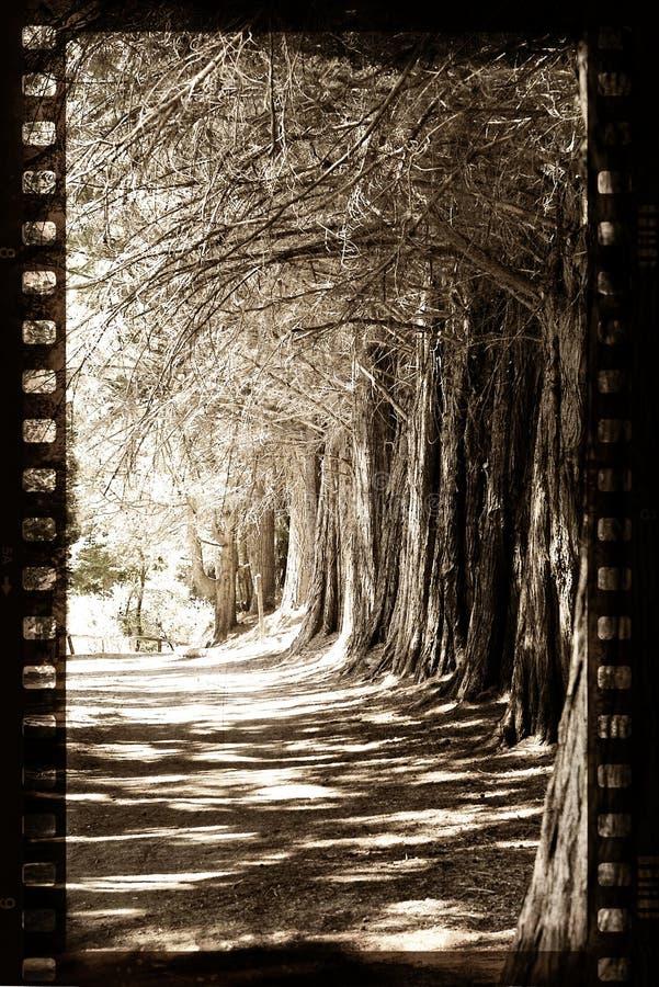 ekranowi grungy drzewa ilustracja wektor
