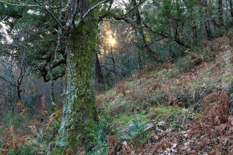 Ekskog med solen som kikar till och med vegetationen royaltyfria foton