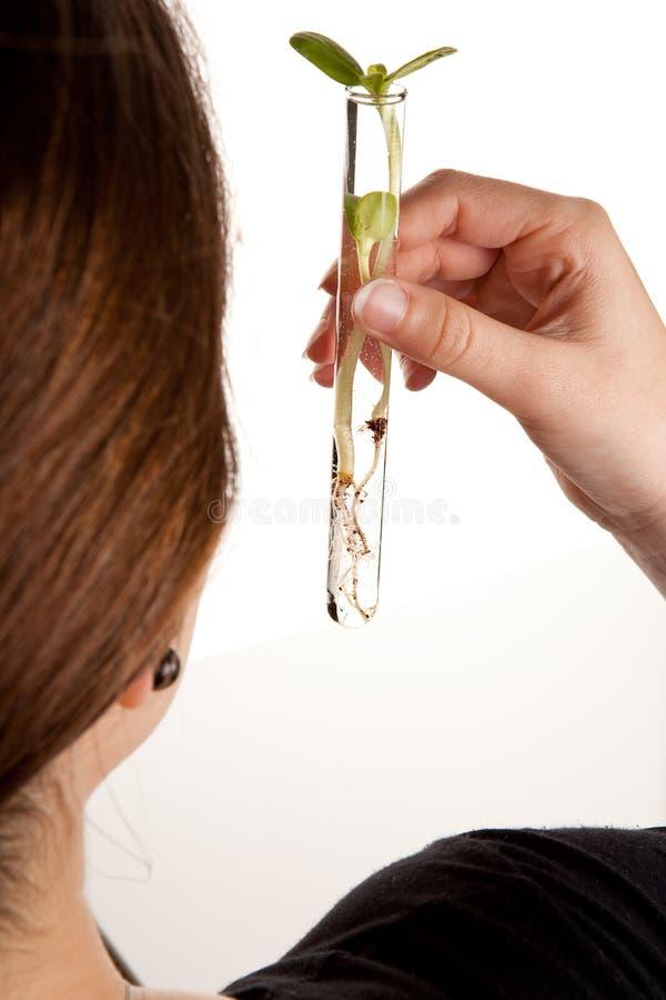 eksperyment roślina zdjęcia royalty free