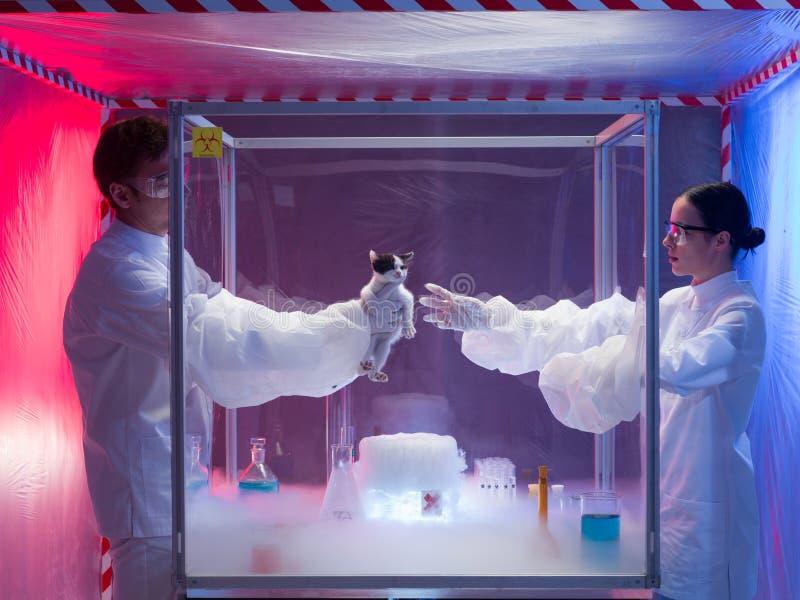 Eksperymenty z żywe zwierzęta w ochrony klauzurze obrazy royalty free