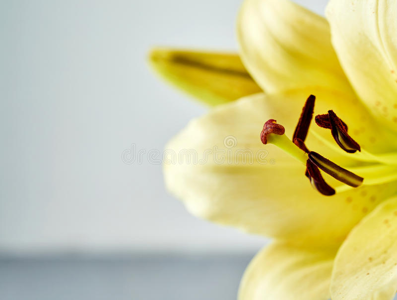 Ekstremum zamknięty up na kwiatów pistels fotografia royalty free
