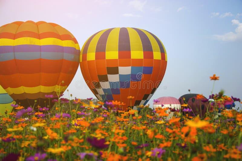 Elévese de globos hermosos en jardín de flores del cosmos con el CCB del cielo imagen de archivo libre de regalías