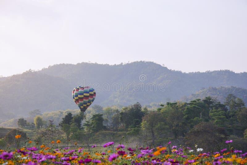 Elévese de globos hermosos en la parte posterior del campo de flores del cosmos w fotografía de archivo libre de regalías