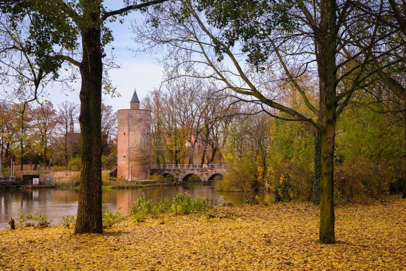 Elévese en el parque de Minnewater en Brujas, Bélgica imagen de archivo libre de regalías