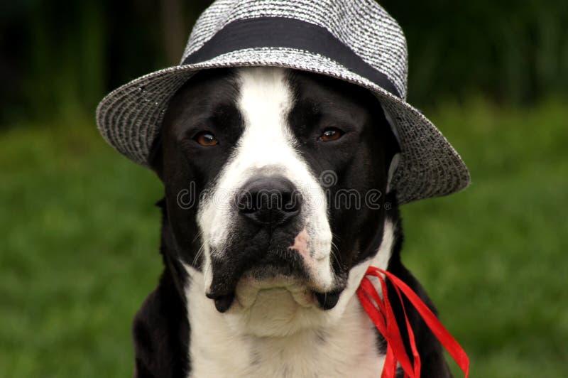 El ¼ del grà del der del auf del mit Sonnenhut de Hund nen Wiese fotos de archivo