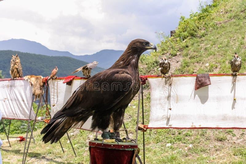 El águila se sienta fotografía de archivo libre de regalías