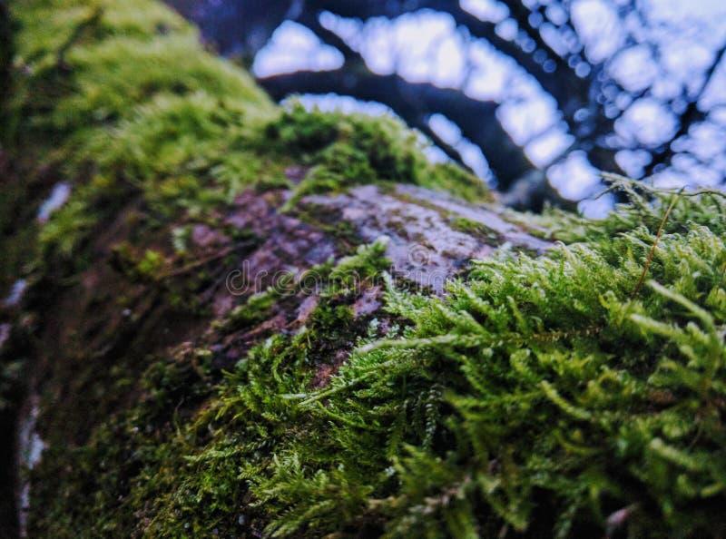El árbol foto de archivo libre de regalías
