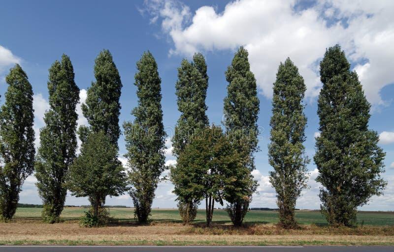 El árbol alineó el camino en la región del Sena y de Marne foto de archivo libre de regalías