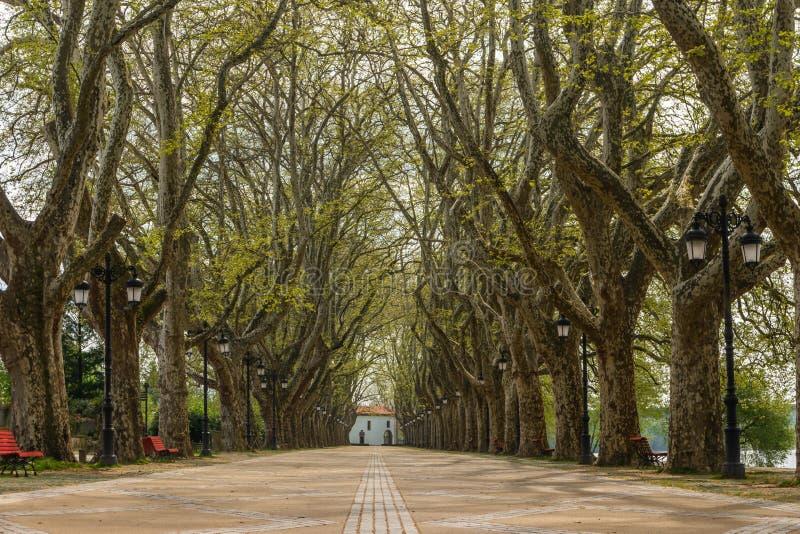 El árbol alineó el paseo a lo largo de Lima River en DOS Platanos de Alameda fotos de archivo