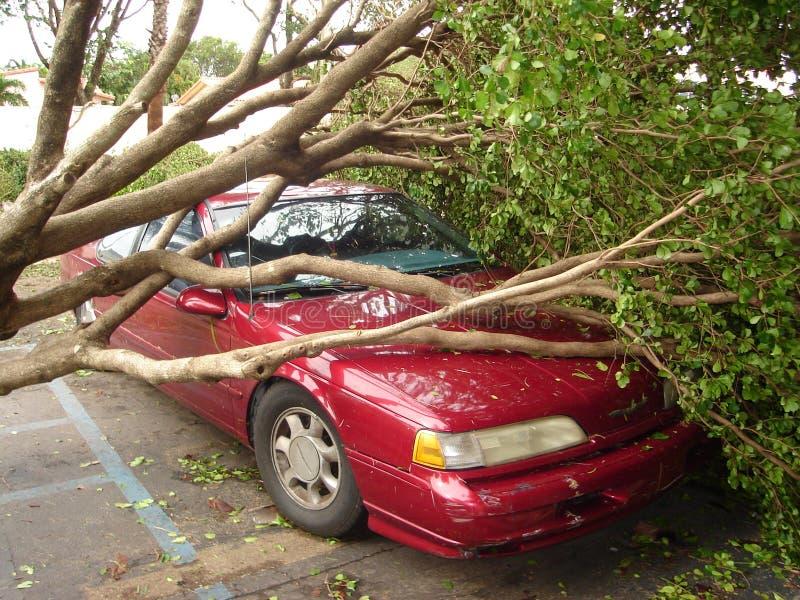 El árbol cae en el coche después de huracán foto de archivo