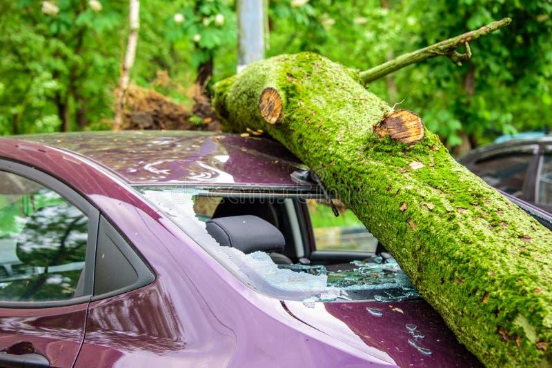 El árbol caido gigantesco machacado parqueó el coche como resultado de los vientos de huracán severos en uno de patios de Moscú foto de archivo libre de regalías