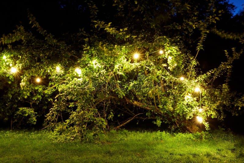 El árbol con la guirnalda se enciende en el jardín del verano de la noche imagen de archivo