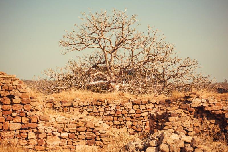 El árbol creció en las ruinas de un edificio de ladrillo viejo fotografía de archivo