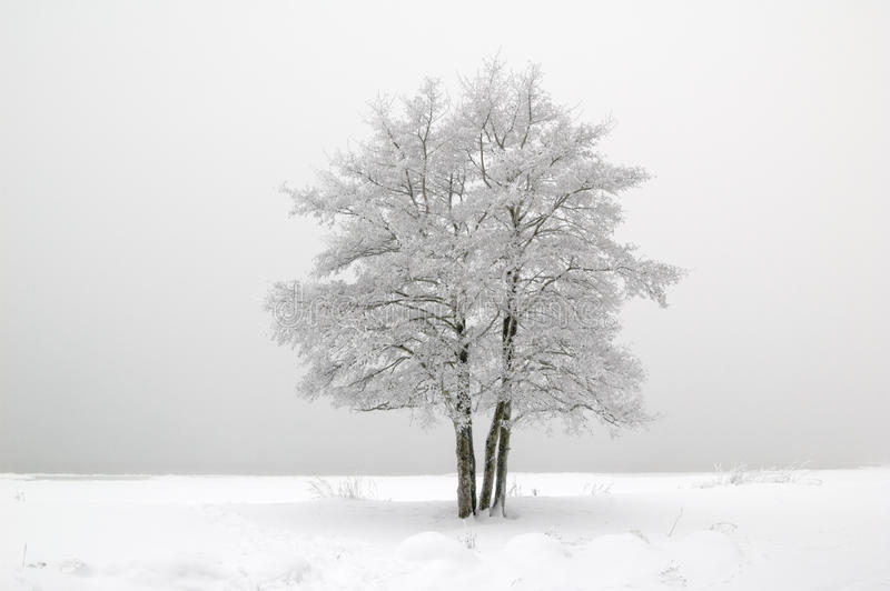 El árbol cubierto con escarcha fotografía de archivo