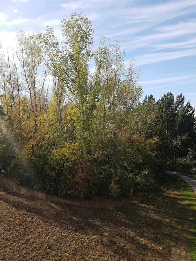 El árbol de hoja caduca debajo del cielo azul, del sol en la puesta del sol, y del arco iris permanece fotografía de archivo libre de regalías