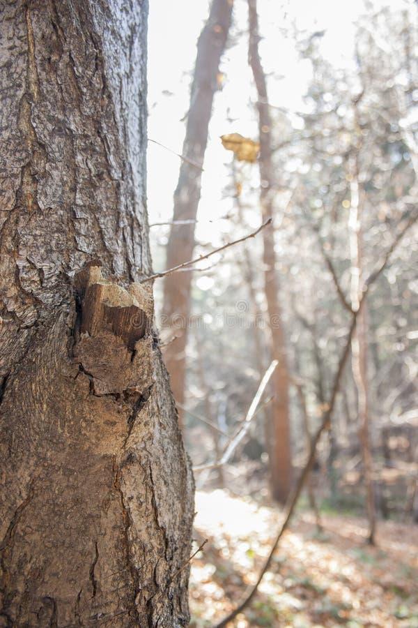 El árbol de la caída foto de archivo libre de regalías