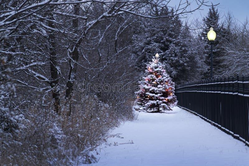 El árbol de navidad nevado brilla intensamente mágico en esta escena del invierno imágenes de archivo libres de regalías
