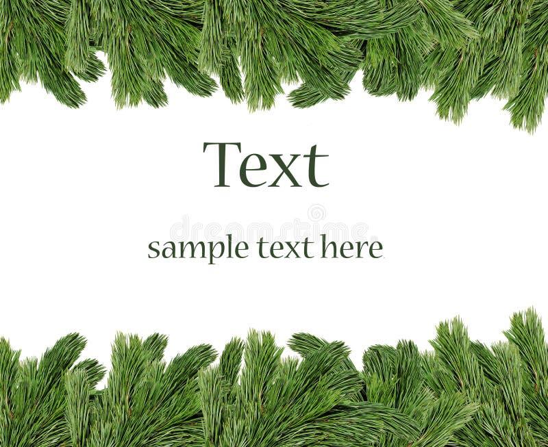 El árbol de navidad ramifica frontera imagen de archivo