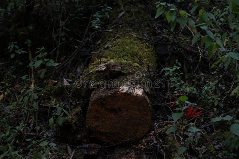 El árbol de pensamientos fotos de archivo