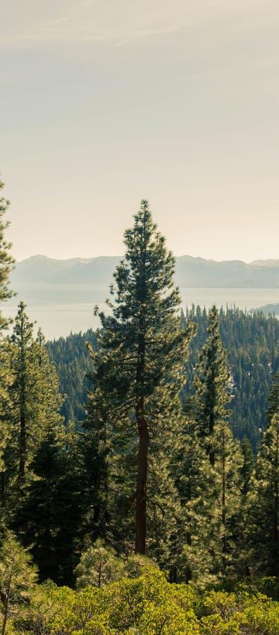 El árbol de pino del lago Tahoe imagenes de archivo
