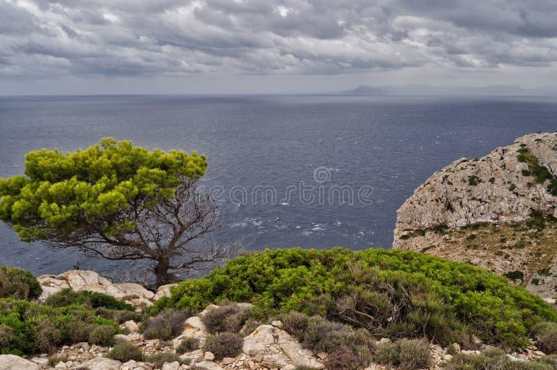 El árbol de pino solo en la roca en el mar Mediterráneo en Mallorca Balearic Island en España durante el clima tempestuoso fotografía de archivo libre de regalías