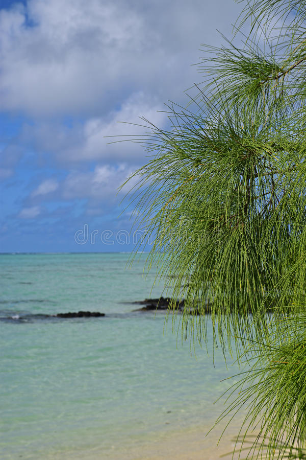 El árbol de pino verde se va con agua de azules turquesa clara limpia y el cielo hermoso en el fondo foto de archivo
