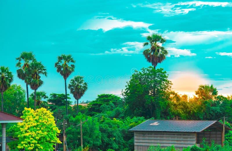 El árbol deja el cielo y el sol en primero plano borroso con el fondo del árbol en jardín del papel pintado o del fondo forestUsi fotografía de archivo libre de regalías