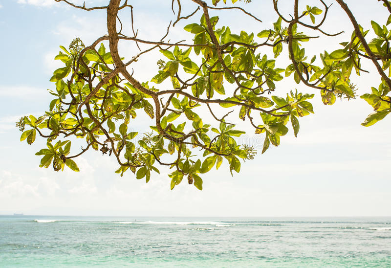 El árbol deja ramas con la opinión de la capa del océano en el fondo imagenes de archivo