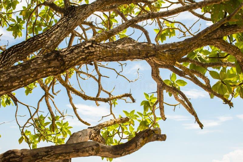 El árbol deja ramas con la opinión de la capa del océano en el fondo imágenes de archivo libres de regalías
