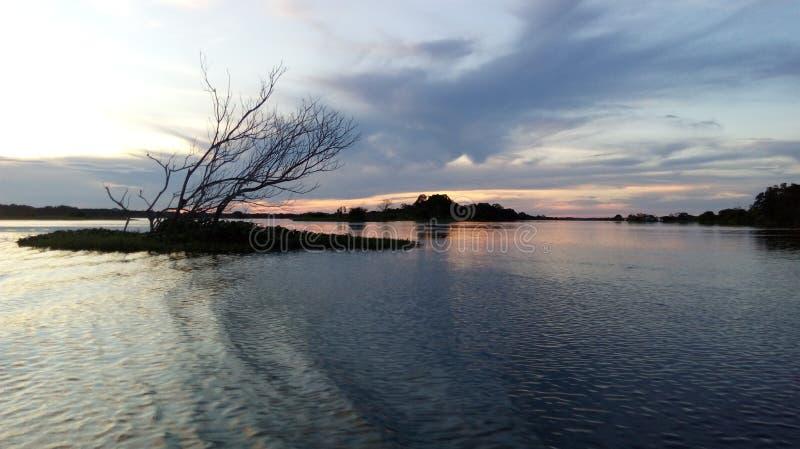 El árbol del Amazonas imagen de archivo libre de regalías
